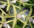 Fotos de Orquídeas